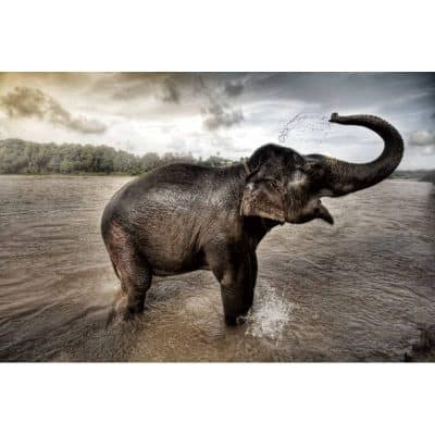 elephant-bathing-in-river-tempered-glass-wall-art-picture-80cm-x-120cm-400x400 Art